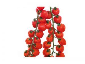 Gardenberry F1