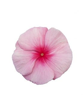 Vinca Cascade STRAWBERRY