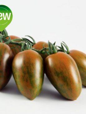 Tomate DATTERINO ZEBRA